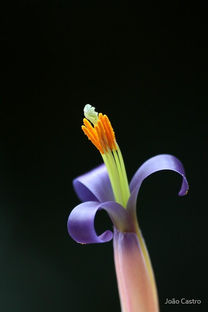 Cactus Flower 7409 by João Castro