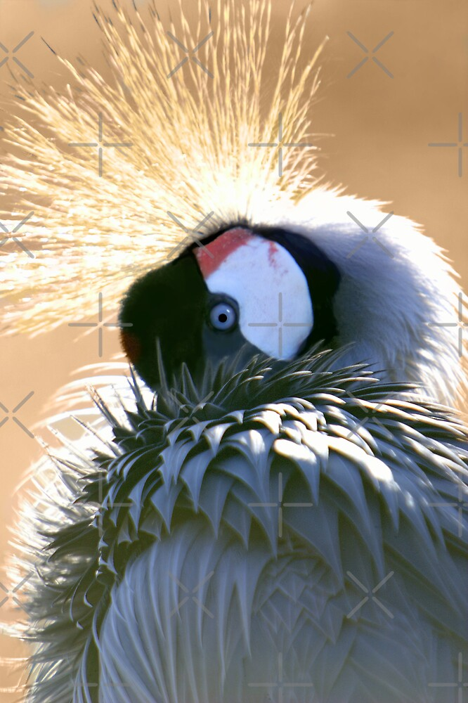 Crowning Glory by Lisa G. Putman