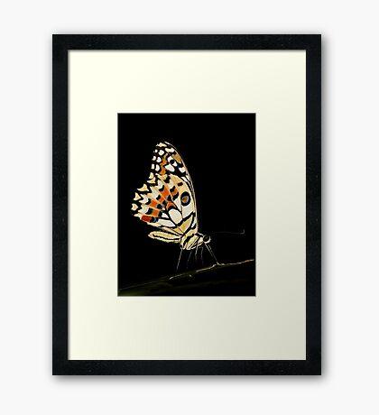 Lime Butterfly Framed Print