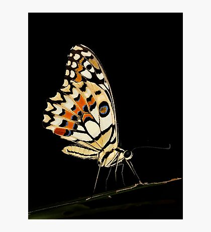 Lime Butterfly Photographic Print