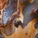 The Tree Bark Collection # 12 by Philip Johnson