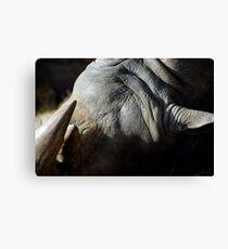 Sleeping Rhino Canvas Print