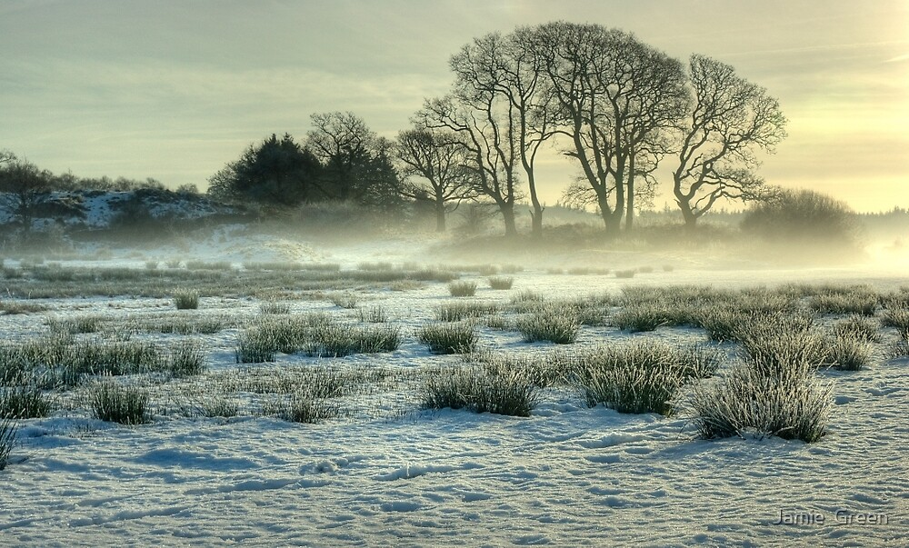 The Frozen Meadow by Jamie  Green