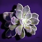 Simply Succulent by Rosemary Sobiera