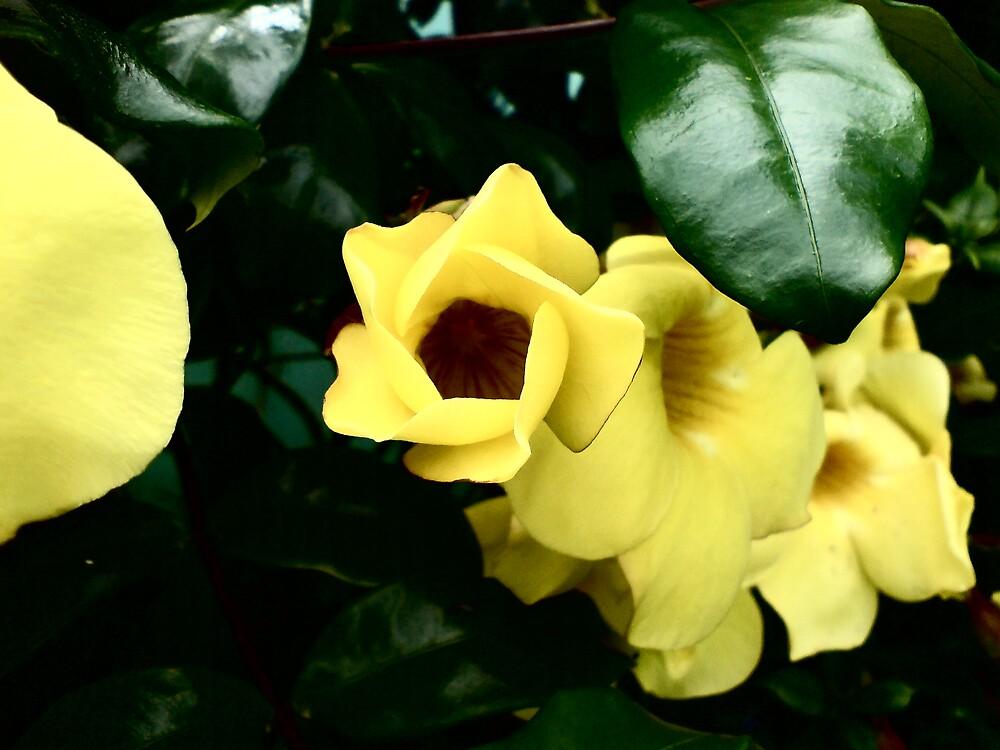 mellow yellow by Richard  Durocher