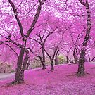 New York City Pink Cherry Blossoms by Vivienne Gucwa