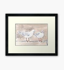 Seagulls at Durban Harbour, South Africa Framed Print