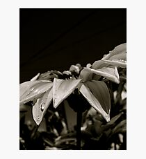 Sliding Photographic Print