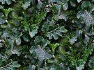 Camoufoliage by Yampimon