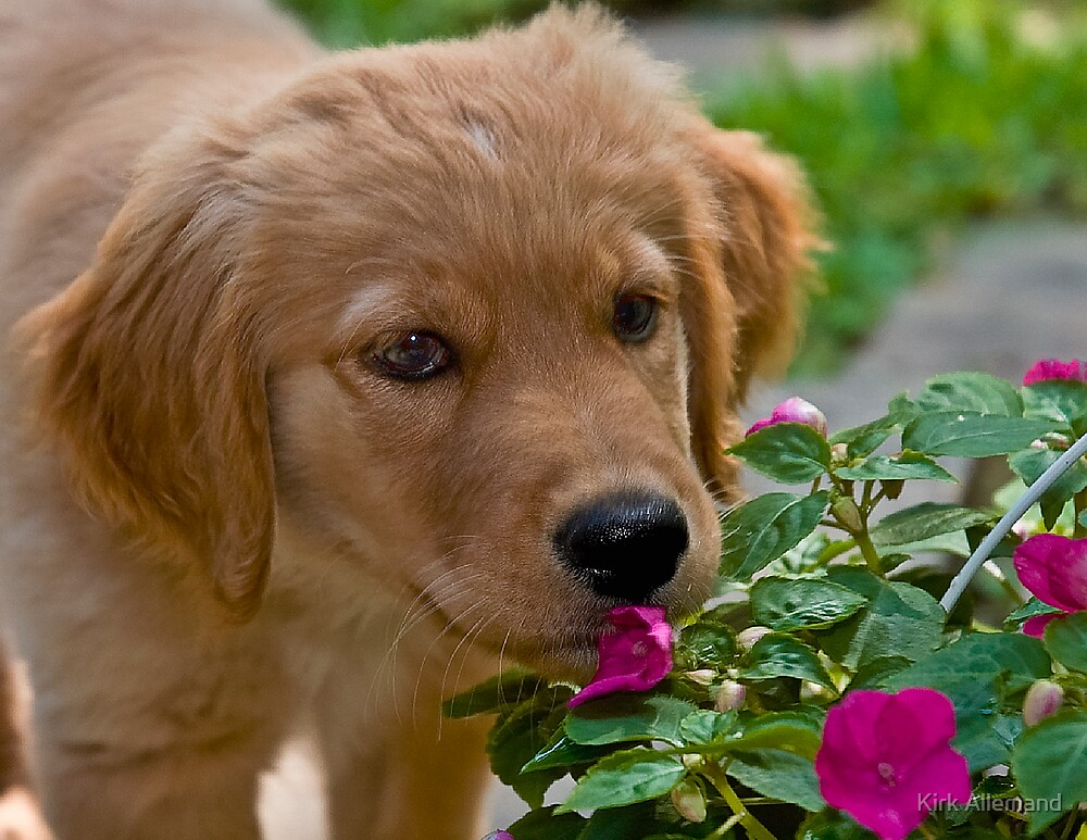 Puppy Flowers by Kirk Allemand