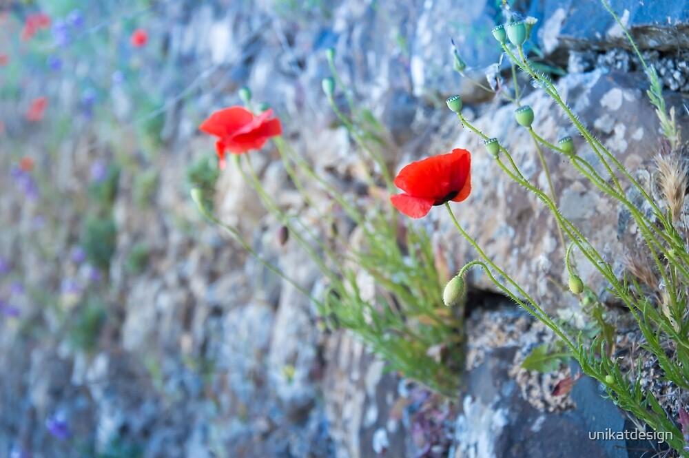 Beautiful Poppy Flowers by unikatdesign