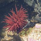 underwater beuttie by 24moonview