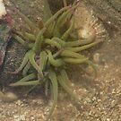 sea enenimy feeding by 24moonview