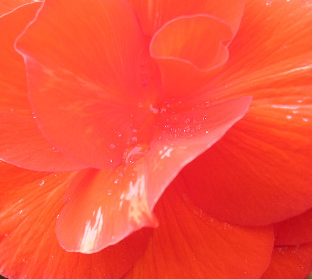 Close up of flower by Justine McCreith