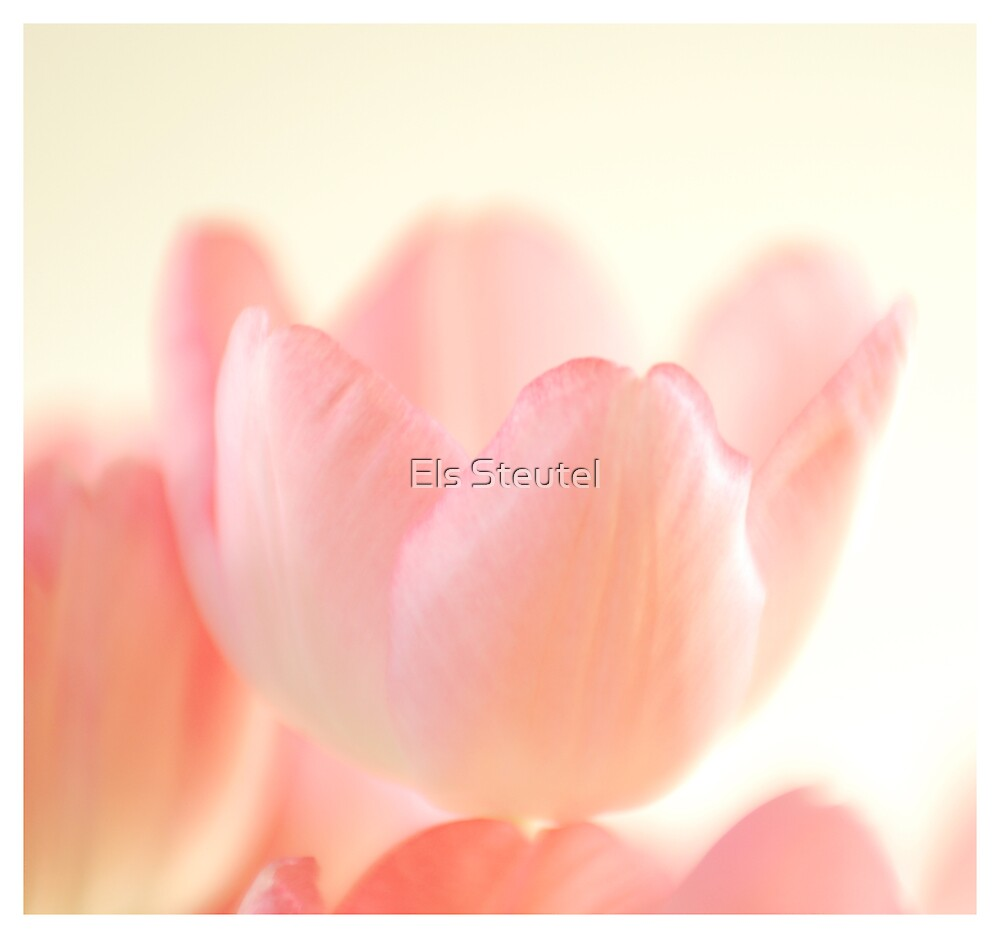 Softness by Els Steutel