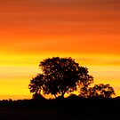 SUNSET IN THE BUSH by Larry Glick