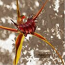 Broadlipped Orchid Photographic montage by Leonie Mac Lean