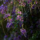 Flowers hanging in there by Danielle Espin