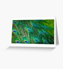 Peacock Mystery Greeting Card