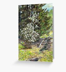 spring in the wood Greeting Card