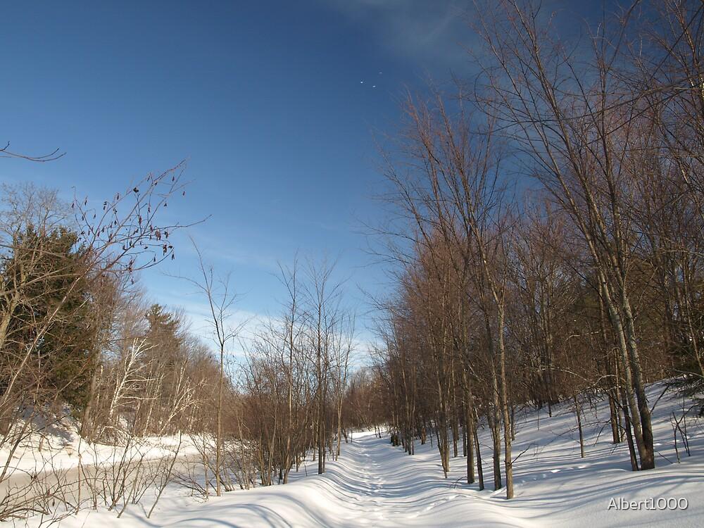 P2030095 Winter scene by Albert1000