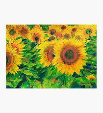 Arles Sunflowers Photographic Print