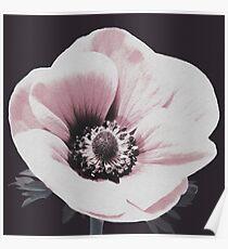 Flower, Flower print, Plant print, Scandinavian print, Trendy print, Styled, Pillow, Modern art, Wall art, Print, Minimalistic, Modern Poster