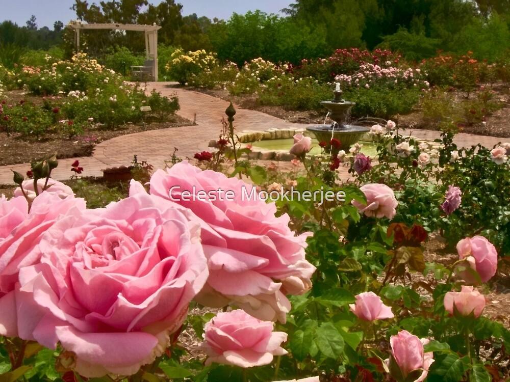 Rose garden perspective by Celeste Mookherjee
