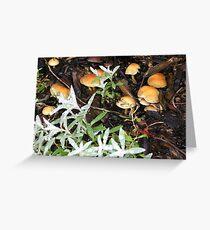 Musky Mushrooms Greeting Card