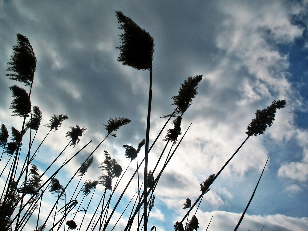 Blowing in the Wind by Tommy Seibold
