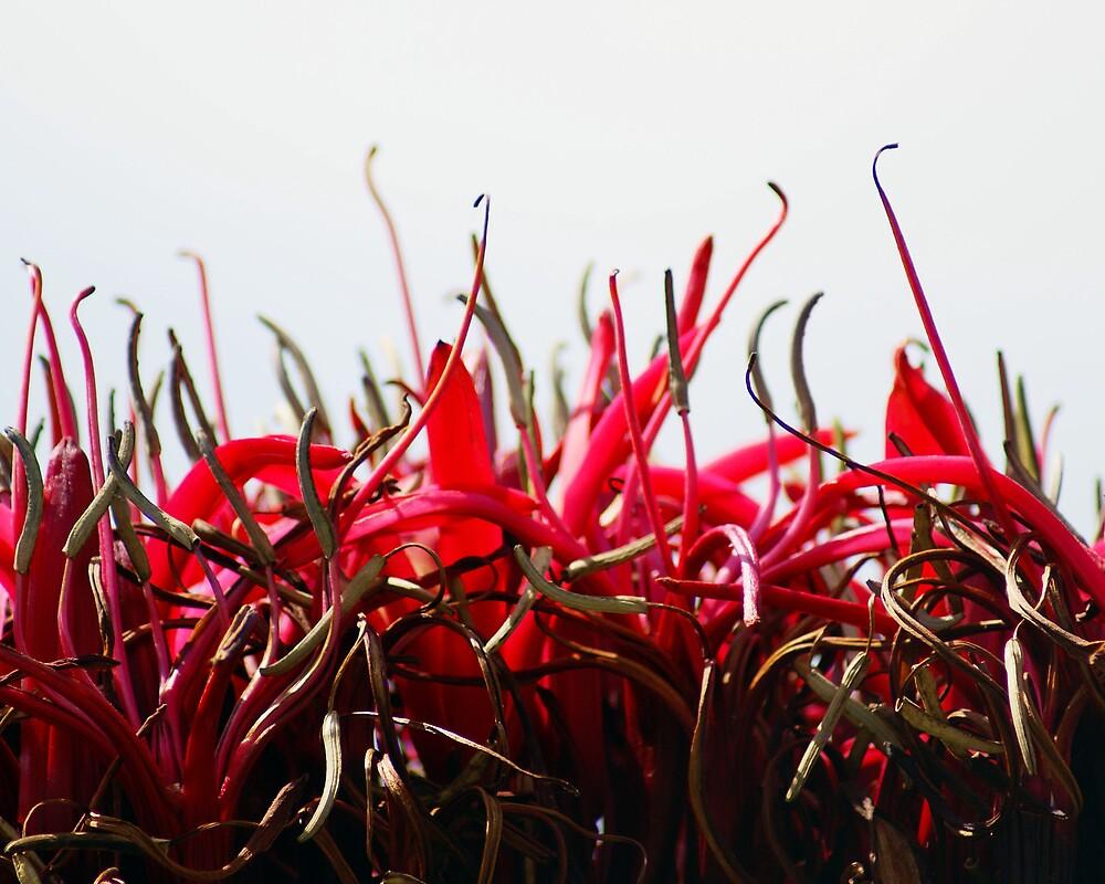 Red Flower by Kim Doyle