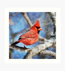 Cardinal Bird Square Art Print