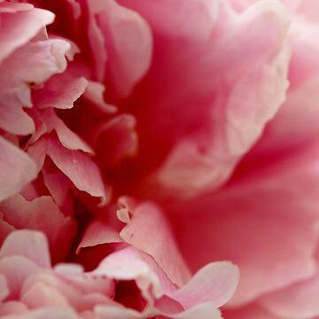 Pink Peony Perfume by rsobiera