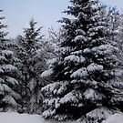 Snowy Trees by Rosemary Sobiera