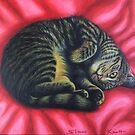 Gigi Cat Curl on a Red Rug  by Simon Mark Knott * Simbird *