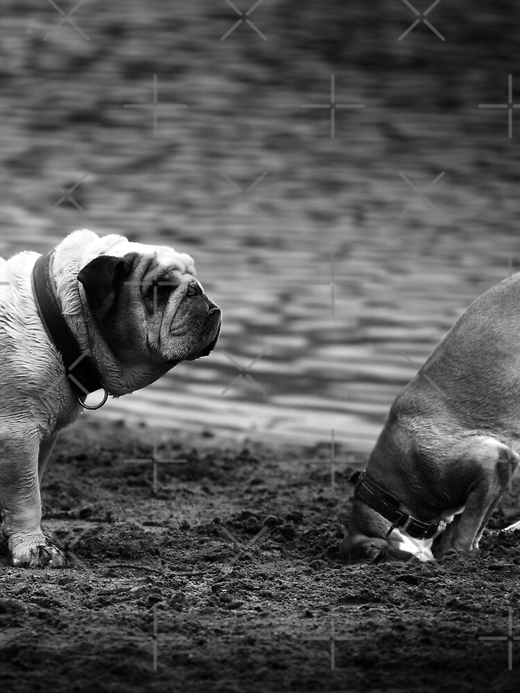 English Bulldog, black and white by hottehue
