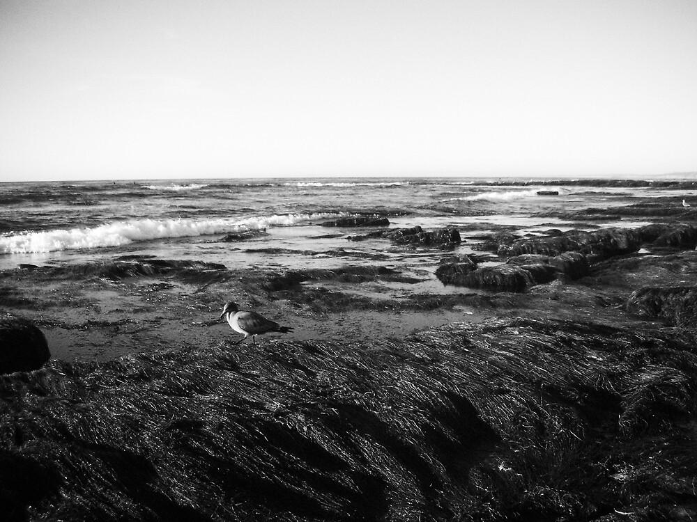 low tide by jake farris