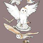 A Parliament of Owls by Jacquelyne Drainville