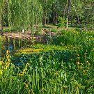 Water Iris by JohnDSmith
