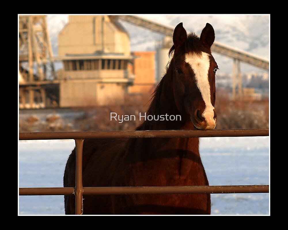 Horse Near Lehi by Ryan Houston