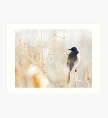 Scrub Jay in Weeds Art Print