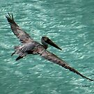 Key West Pelican by Rosemary Sobiera