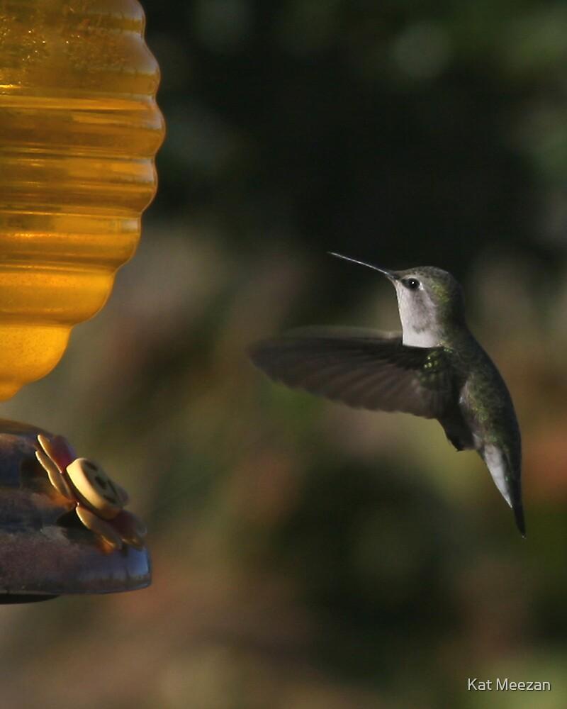 Hummingbird by Kat Meezan