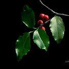 Christmas Holly by Rosemary Sobiera