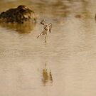 least ....bird by Derek McMorrine