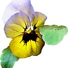 Pansy Saluting by Susan Savad