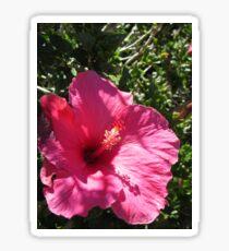 Cultivated Hibiscus Sticker