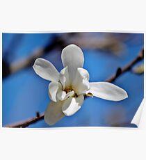 Spring in the Garden III Poster