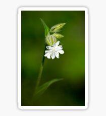 Campion Wildflower Sticker