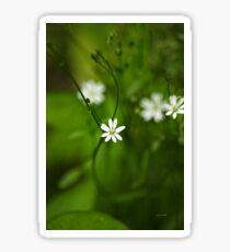 Chickweed Flowers Sticker